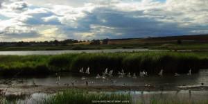 Slough Birds 0425 by Sanny Leviste
