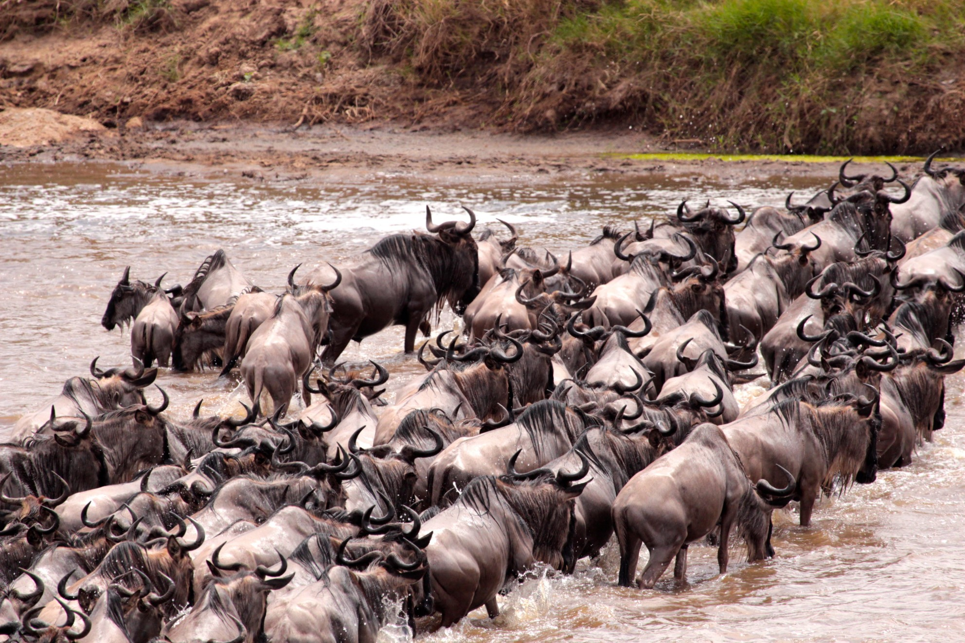 Mara River Tanzania in Africa Answers Photo Contest