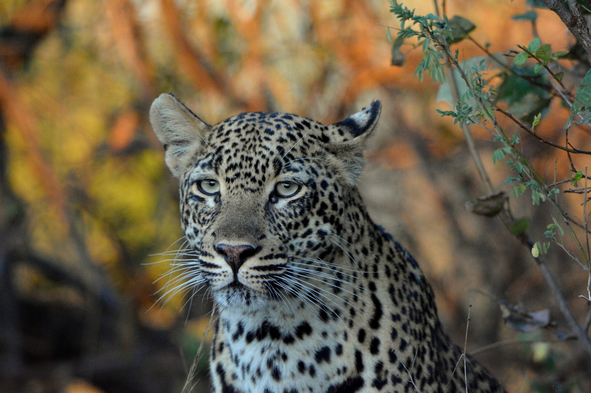 Sabi Sand Reserve South Africa in Africa Answers Photo Contest